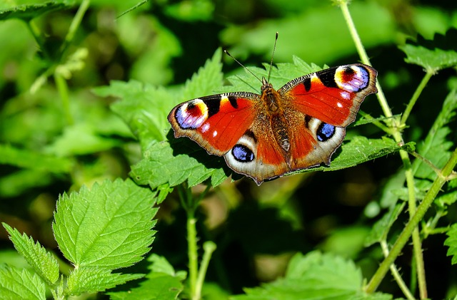 Where to Go and See Butterflies